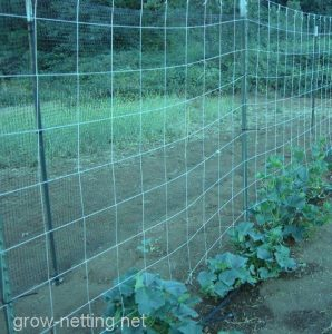 HORTOMALLAS Tutoring grow netting installed